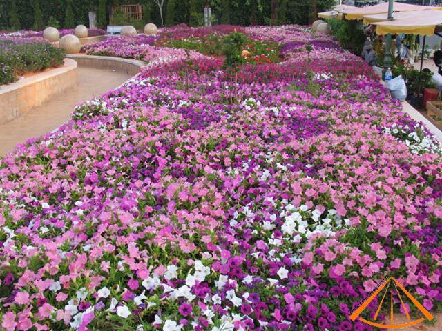 ezvietnamesecuisine.com/dalat-city-city-of-flower